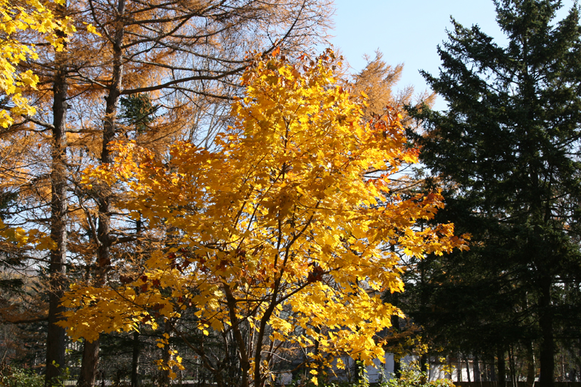 Autumn colours, Yuzhno-Sakhalinsk